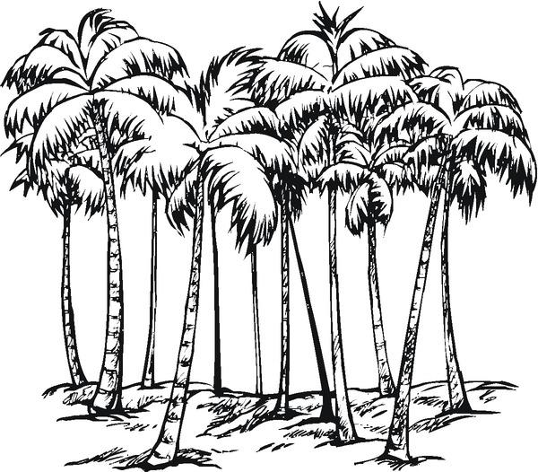 Kolorowanka palmy