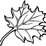 Kolorowanka liście jesienne
