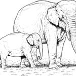 Kolorowanka słonie