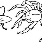 Kolorowanka z pająkiem